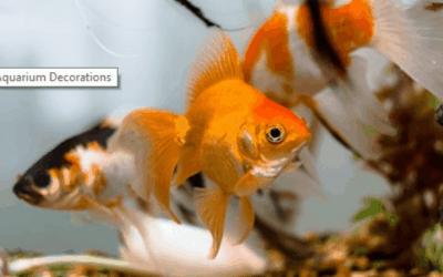 DIY Aquarium Decorations | Homemade Aquarium Decorations | mrtoppet.com