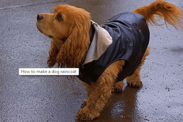 How to Make a Dog Raincoat | Homemade Dog Raincoat (mrtoppet.com)