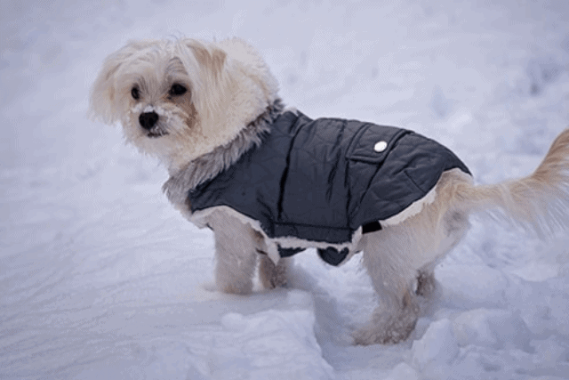 How To Keep Outside Dogs Warm In The Winter Mrtoppet