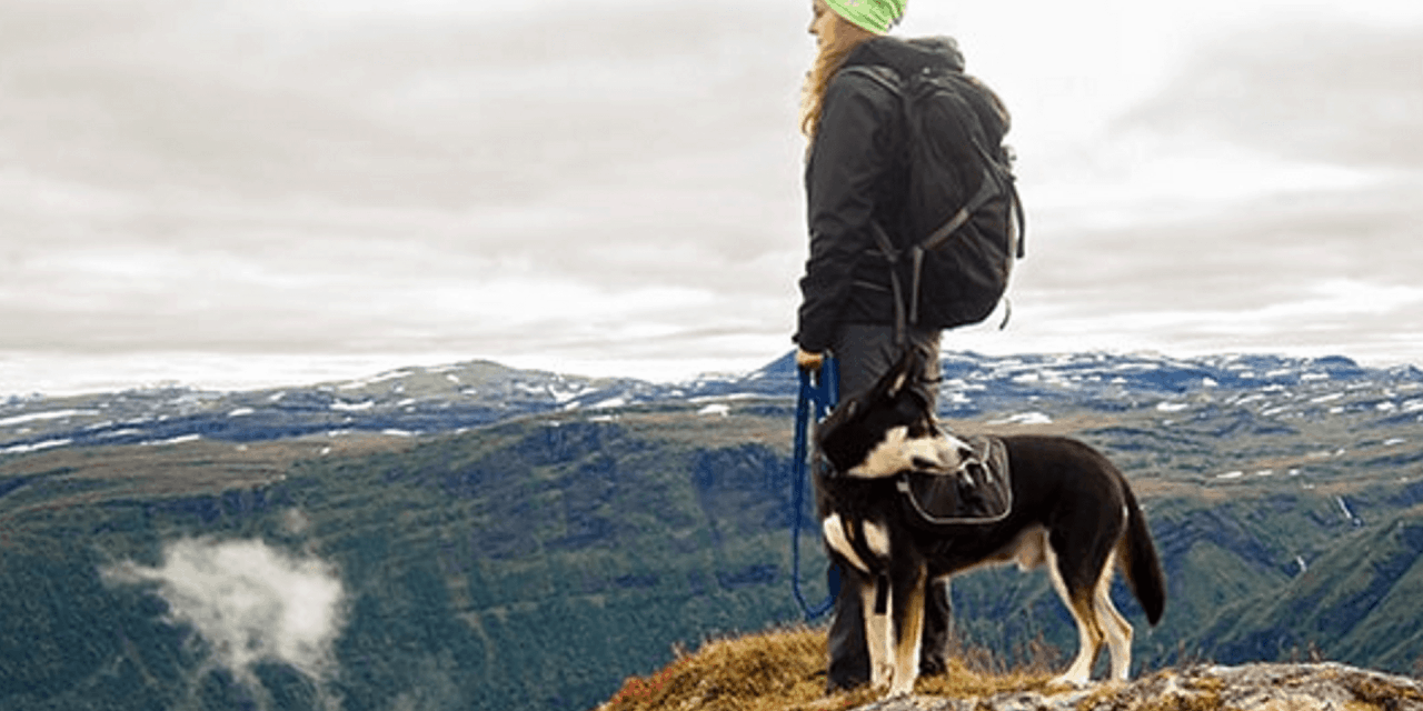 15 Best Dog Breeds for Hiking off Leash | Top Hiking