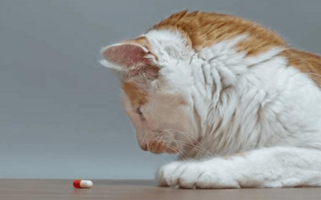 benadryl for cat allergy