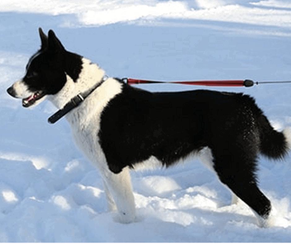best dog breeds for hiking off leash