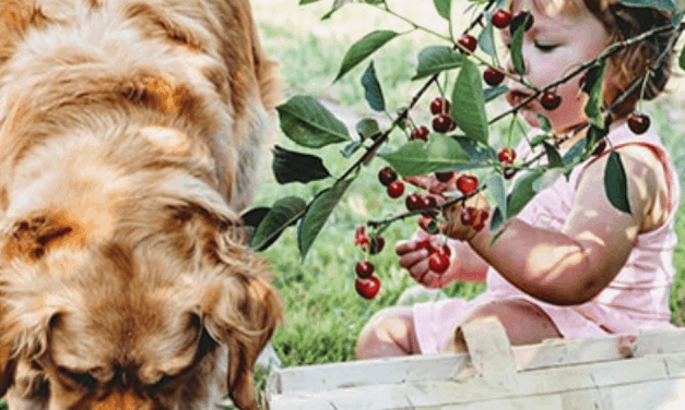 The Ultimate Guide To fruits and vegetables for dogs