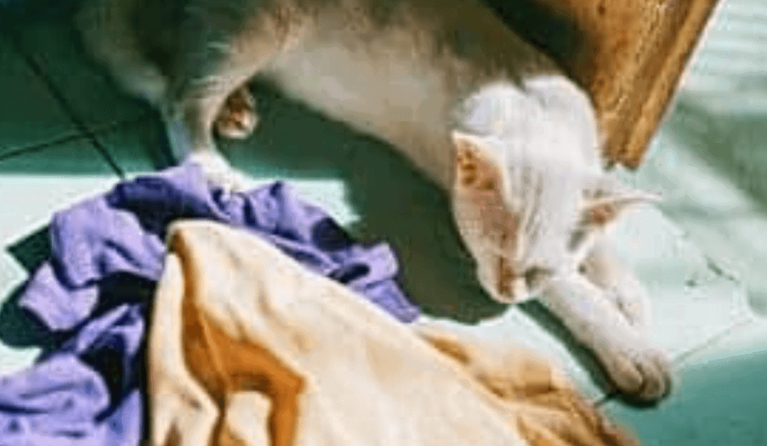 The Untold Secret To cat peeing on clothes and towels