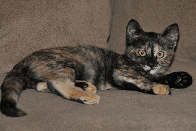 HOW MUCH IS A MALE TORTOISESHELL CAT WORTH?