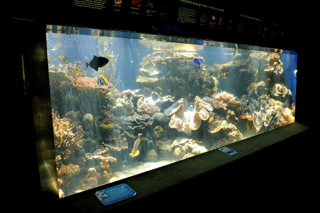 mario fish tank decorations