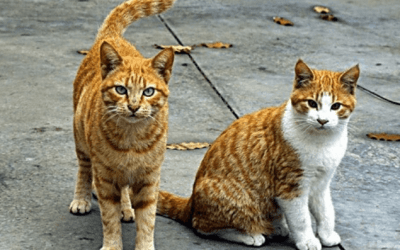 cat loses balance back legs