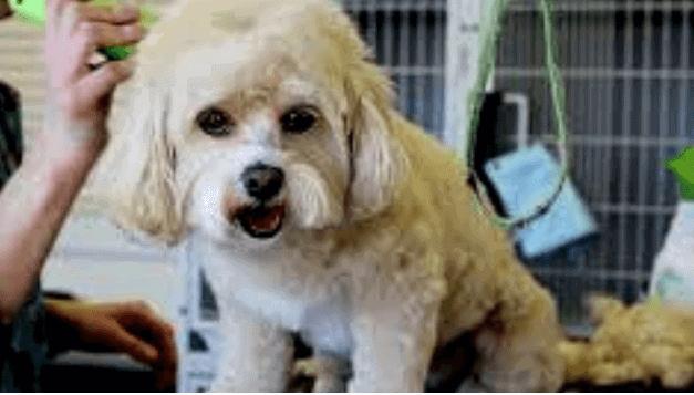3 Best Dog Hair Dryer only for you |mrtoppet.com