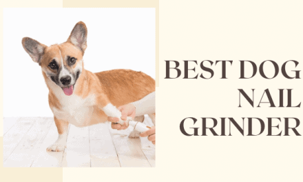 5 best Dog Nail Grinder Reviews | mrtoppet Ultimate Guide
