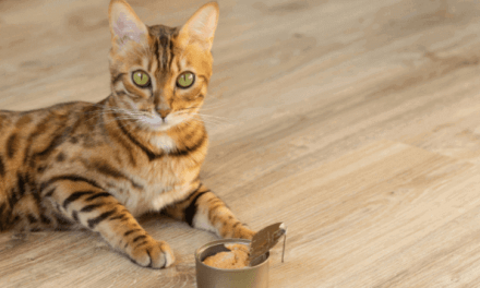 Top 10 Best Cat Food for Regurgitation Reviews in 2021