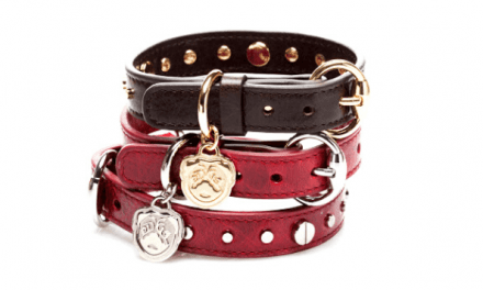 5 Best Leather Dog Collars Reviews in 2021