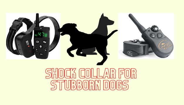 The Ultimate Guide To Best Shock Collar For Stubborn Dogs
