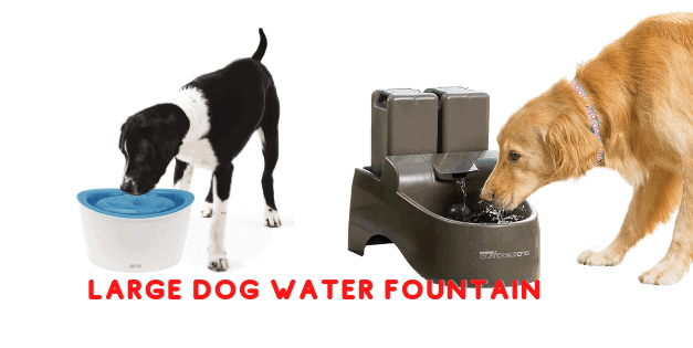 Best Large Dog Water Fountain| Tips You Will Read This Year