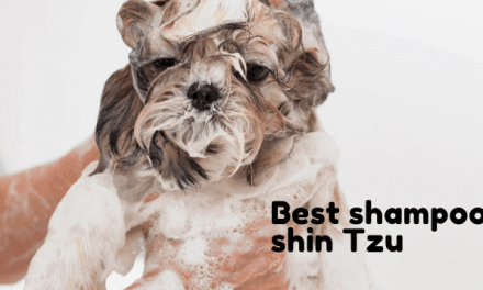 the 6 Best shampoo for shin Tzu EDITOR recommendation