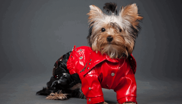 5 Best treats for yorkie puppies |mrtoppet.com