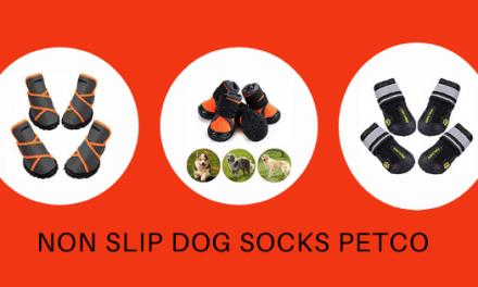 Take Advantage Of Non-Slip Dog Socks Petco On Budget