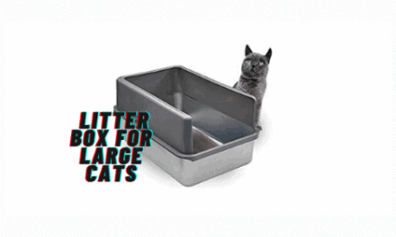 The 10 Best Litter Boxes For Large Cats Reviews in 2021