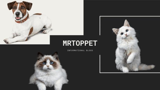 mrtoppet.com